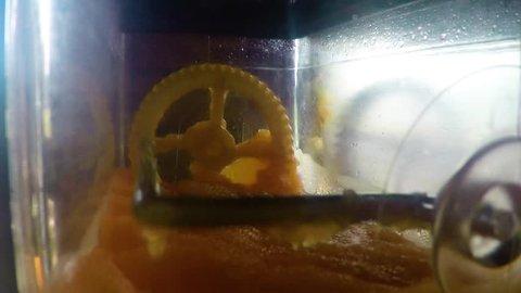 Flavored Ice Machine with orange slush.