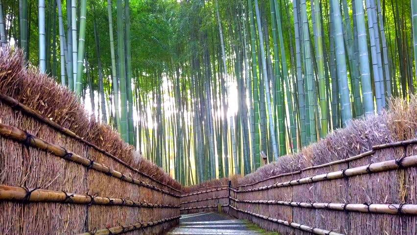 Walkway bamboo tunnel named Arashiyama bamboo forest in Kyoto, Tourist landmark of Japan | Shutterstock HD Video #1022461456