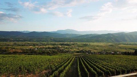 drone Imotski with vineyard