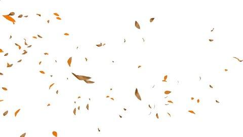 Autumn Leafs Flying, white background, 4K