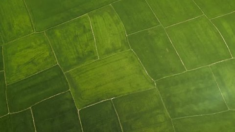 Rice field from above flying drone. Aerial shot green rice plantation in village. Agricultural industry. Farming and agriculture concept. Natural landscape top view