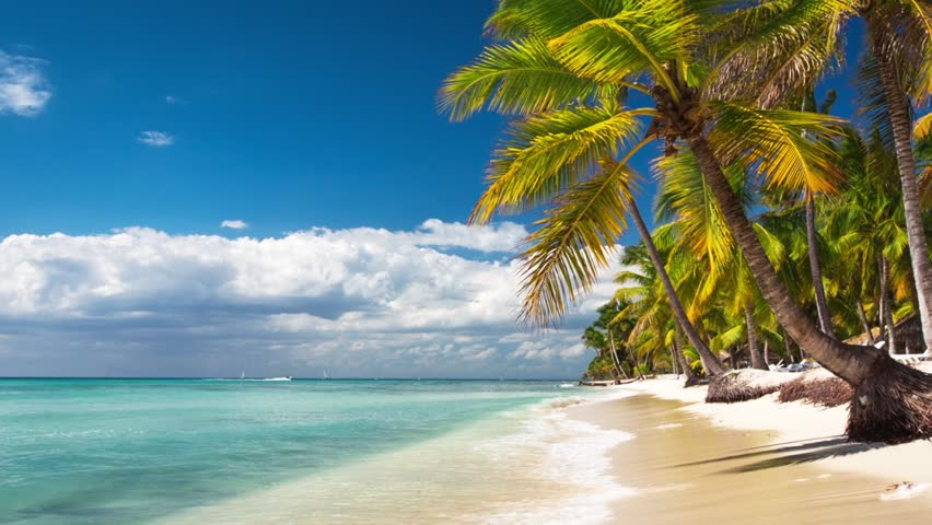 Stock Video Of Palm Trees On Luxury Exotic Beach 10233026 Shutterstock