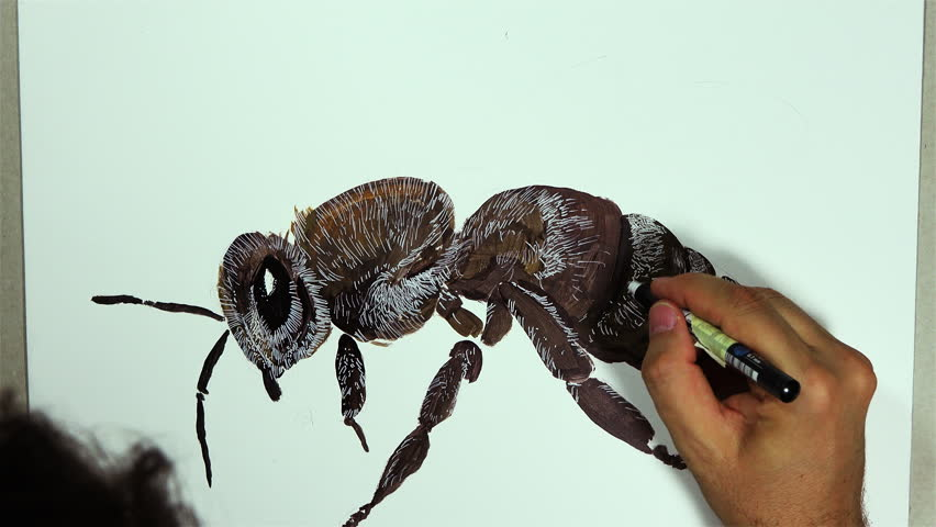 A hand draws a bee insect on a white board with a pencil, time lapse video | Shutterstock HD Video #1023322126
