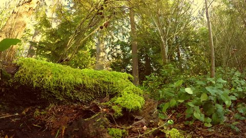 A Sun Lapse of the sun moving across the Moss Covered woods in Issaquah, Washington.