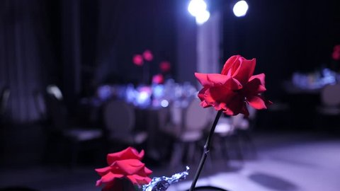 Red rose on a banquet table on a blurred background