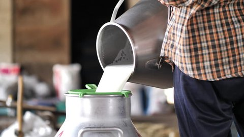 Farmer woman pouring raw milk into container tank milking in dairy farm. career agriculture. Slow Motion