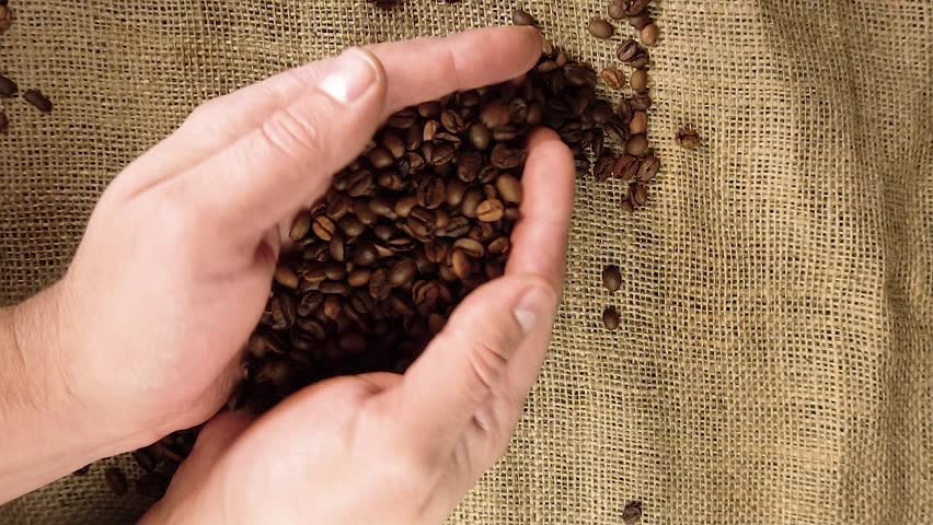 Coffee grains are poured from the palm, top view | Shutterstock HD Video #1024241486
