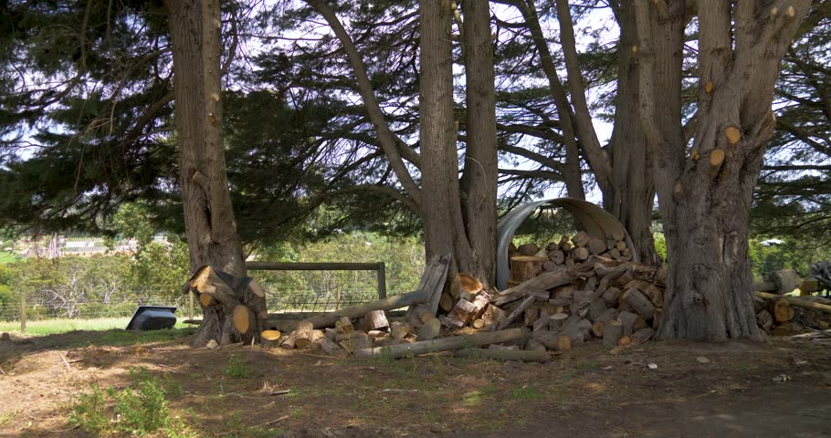 A big stack of fire wood is stored by an old tin water tank underneath big Cyprus trees in rural Victoria Australia.   Shutterstock HD Video #1024381316