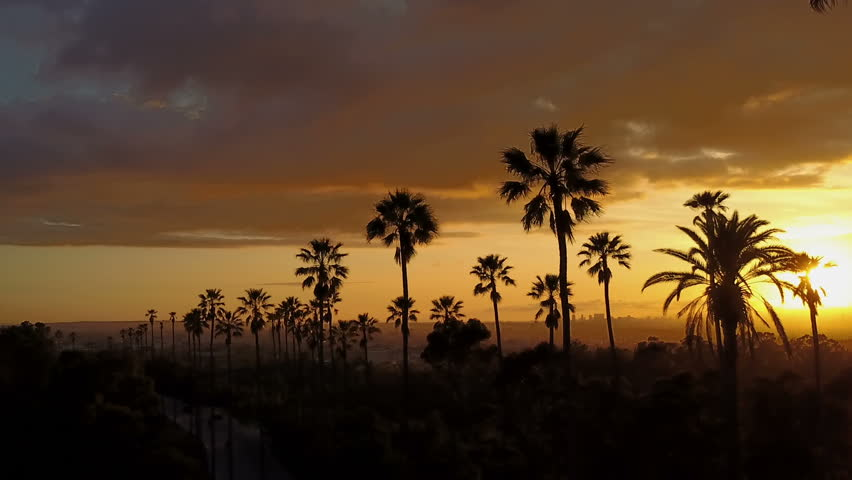 Silhouette of palm trees and a beautiful sunset. | Shutterstock HD Video #1024650236