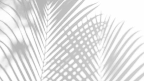 closeup the motion of shadow palm leaves on a white wall background. 4k