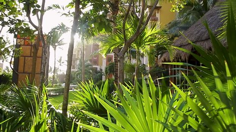 A moving shot of sunlight coming through palm fronds and trees at a tropical beach resort in Mexico.