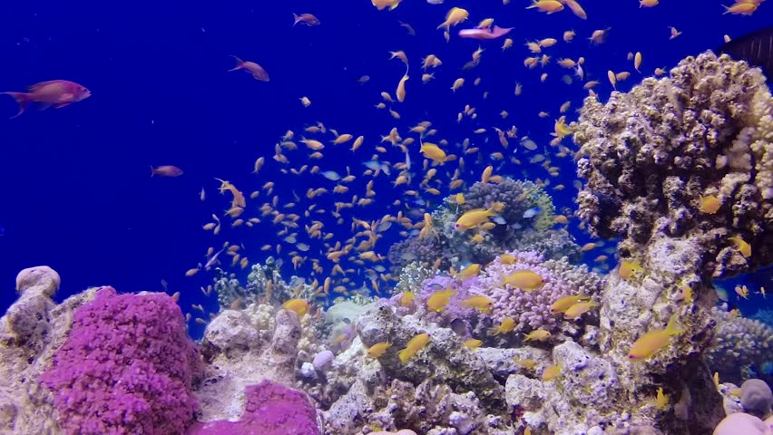 Static video, coral reef in the Red Sea, Abu Dub. Beautiful underwater landscape with tropical fish and corals. Life coral reef. Egypt | Shutterstock HD Video #1025785406