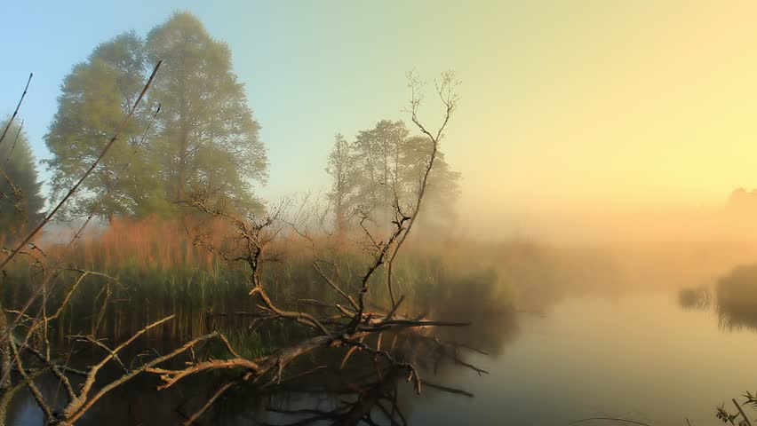 Sunrise in the forest near the river on a foggy morning beautiful sunny color pastel colors. Wild nature | Shutterstock HD Video #1025821046
