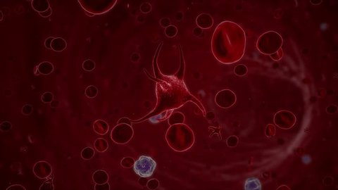 A blood platelet, a thrombocyte,ing through a blood stream in a vein along with leukocytes and erythrocytes. Thrombocytes are crucial for closing open wounds, but can also cause blood clots.