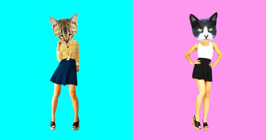 Animation minimal gif art. Set of funny cats | Shutterstock HD Video #1026037286