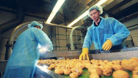 Men cut potatoes on a modern conveyor at a food factory.