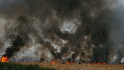 Scary fire on the dried river. Black smoke overlapse the sky. Reed burning.  4k footage