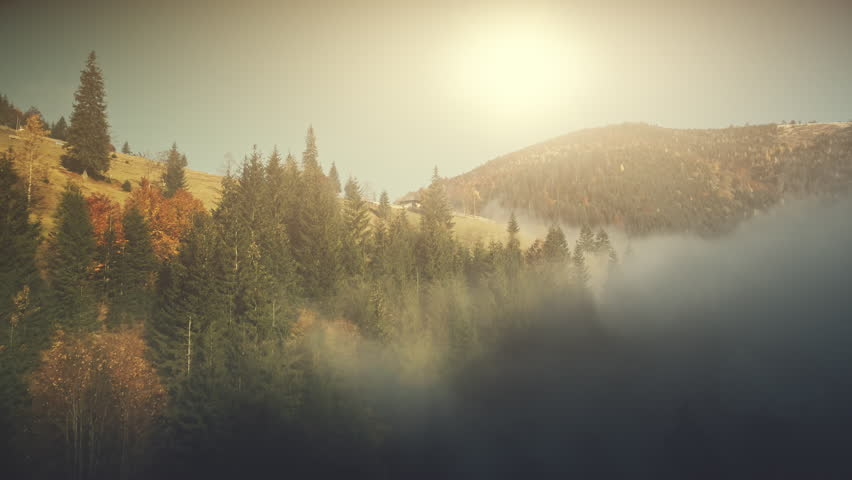 Sunny Autumn Mountainous Landscape Aerial View. Fir Forest Hill Slope Surface Wild Nature Scenery. Thick Fog Ravine Wooden Hut Mountain Meadow Natural Environment Concept Drone Flight Footage 4K (UHD)