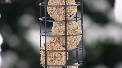 Close up of a Great tit bird feeding on fat balls in a bird feeder in a wintry snowy British garden scene, Shallow definition