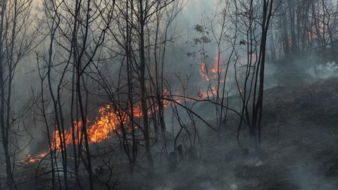 Fire in forest destroys nature