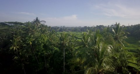 Aerial Drone View of Bali rice fields and patties in 4k on a bright sunny day in Indonesia