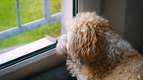 Dog watching neighbours