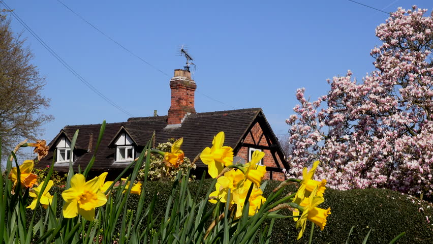 English Country cottage in the spring small village scene rural UK daffodils and crocus 4K | Shutterstock HD Video #1027680266