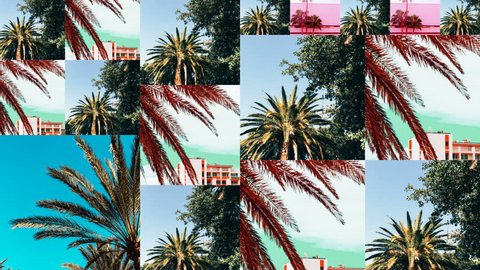 Animation Slide Show design. Tropical palm location. Perfect background for travel agencies
