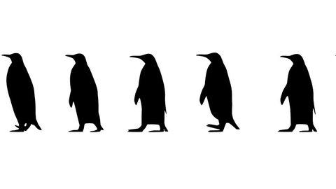 Desenhos De Pinguim Stock Video Footage 4k And Hd Video Clips