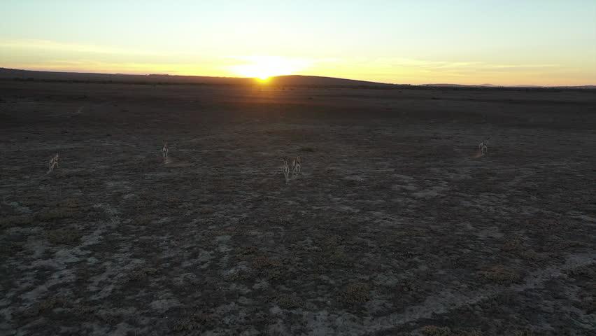 Aerial view, Springboks Running Sunset South Africa | Shutterstock HD Video #1028398706