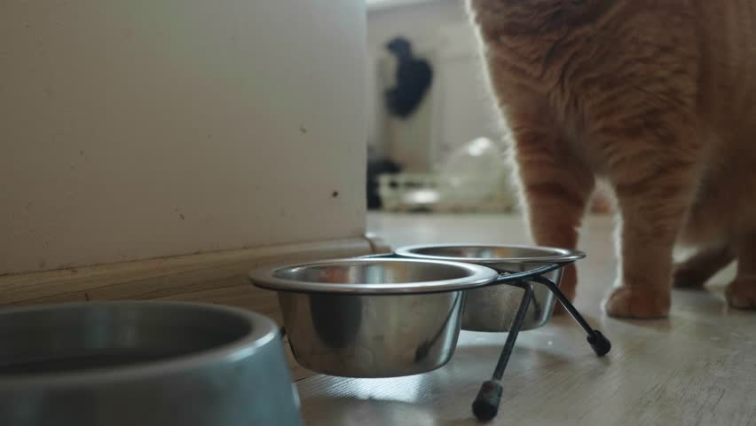 Male hand takes metal bowl from cat and puts it back with cat food | Shutterstock HD Video #1028399366