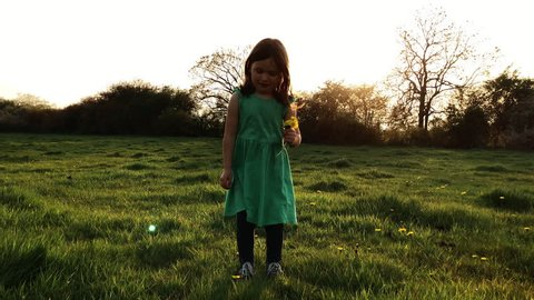 Young girl picking fresh spring dandelions in a field