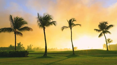 Tropical golf course, palm trees and golden sunset. Dominican Republic, Punta Cana