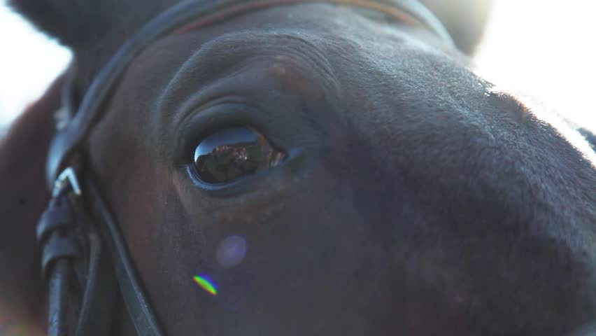 Close up view of sad brown horse eyes in bright sunlight. Sun beams. Domestic animal, needs freedom. Muzzle of a horse. Graceful horse. Horse riding in the summer forest. Caring for the animals