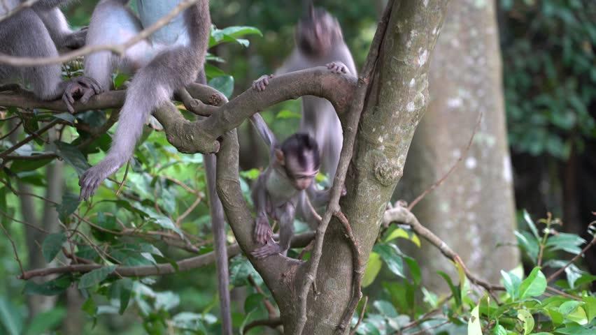 Free Monkey Stock Video Footage Download 4K HD 77 Clips
