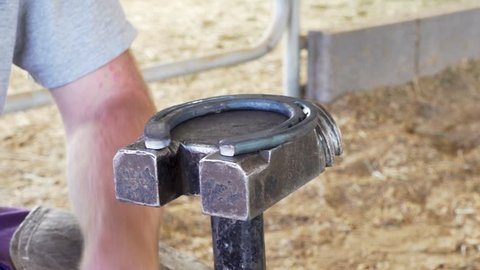 Anvil and hammer are being used by farrier to level shoe. Farrier is using fingers to tap around horse shoe to see where it may be uneven.