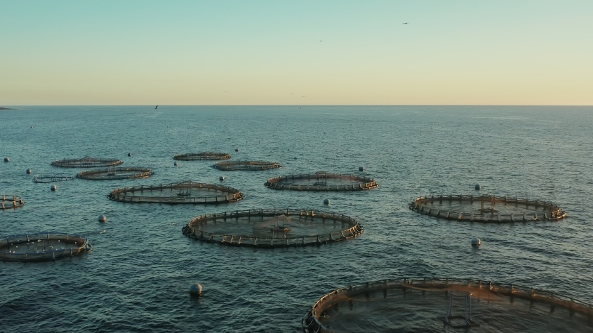 Seagulls circling over a fish farm in the open ocean during sunset | Shutterstock HD Video #1029448226