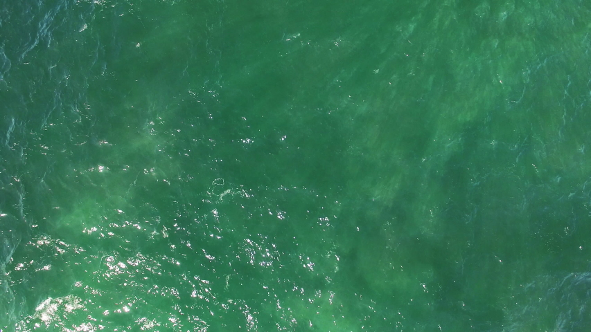 overhead drone shot panning from empty water to grey whales slowly migrating along in shallow water off Baja California, 3 cow calf pairs