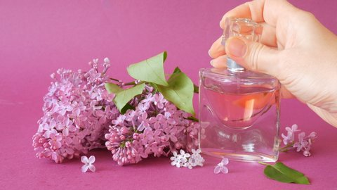 lilac flowers bunch and perfume on lilac background, woman using perfume with lilac fregrance