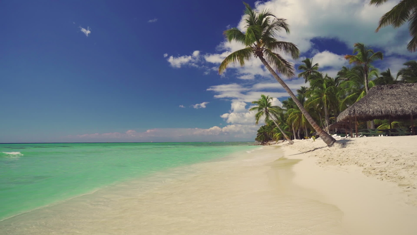 Exotic island. Coconut palm trees and tropical beach. Summer holiday on the Caribbean. | Shutterstock HD Video #1029967826