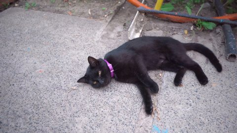 Black stray cat laying on street and licking itself