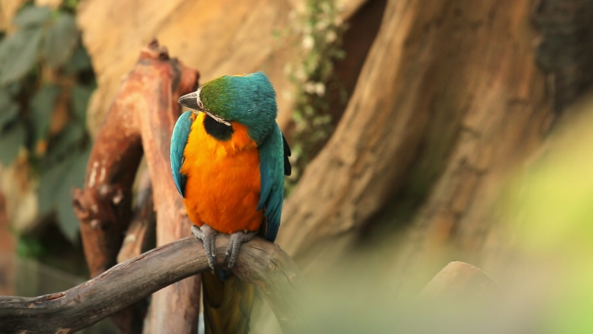A pair of macaw parrots. repeat each other's movements | Shutterstock HD Video #1030008926