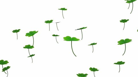 Four-leaf clovers falling rotating slowly and lightly, white background, 3D illustration, animation.