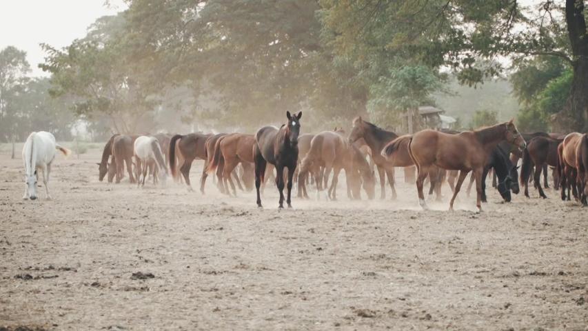 Horses safari travel farm natural | Shutterstock HD Video #1030044836