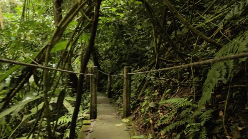 A WALK IN THE JUNGLE | Shutterstock HD Video #1030393136