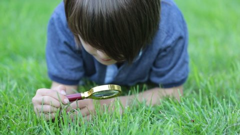 Preteen child, boy, exploring with magnifying glass, watching ladybugs in the grass