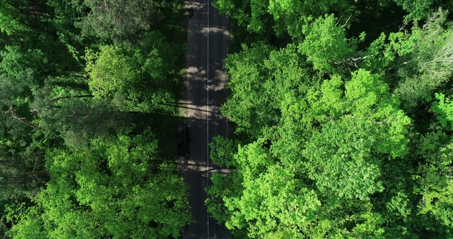 Cars ride along the road between trees in the woods   Shutterstock HD Video #1030525766