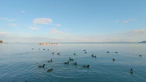 Competitive Rowing Team training on Lake Balaton while people feeding ducks with bread