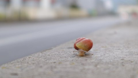 Tiny snail braving the street on concrete wall next to a road with traffic,ing sped up, medium close up still shot