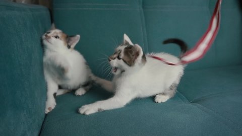 Funny cats playing with rope. Domestic pet is joying with toy, kittens.